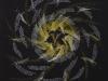 006 蘆野 ゆり子 「J.Dunstable:Veni Sancte Spiritus 「聖霊よ、来たりたまえ」」